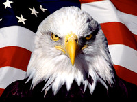 eagle-on-flag-wallpapers_12095_1600x1200